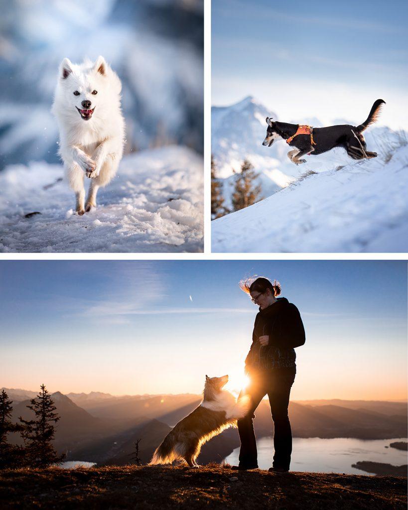 Hundefotografie im Schnee auf der Rigi Schweiz