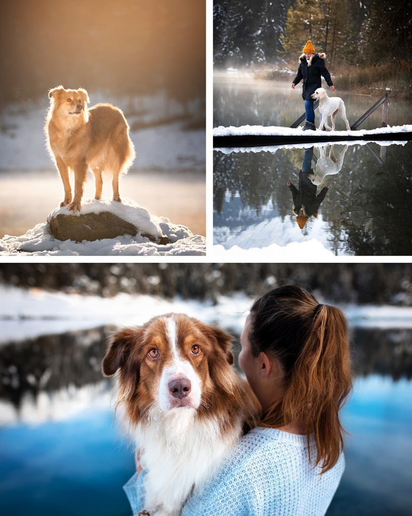 Hundefotografie Caumasee und Crestasee flims
